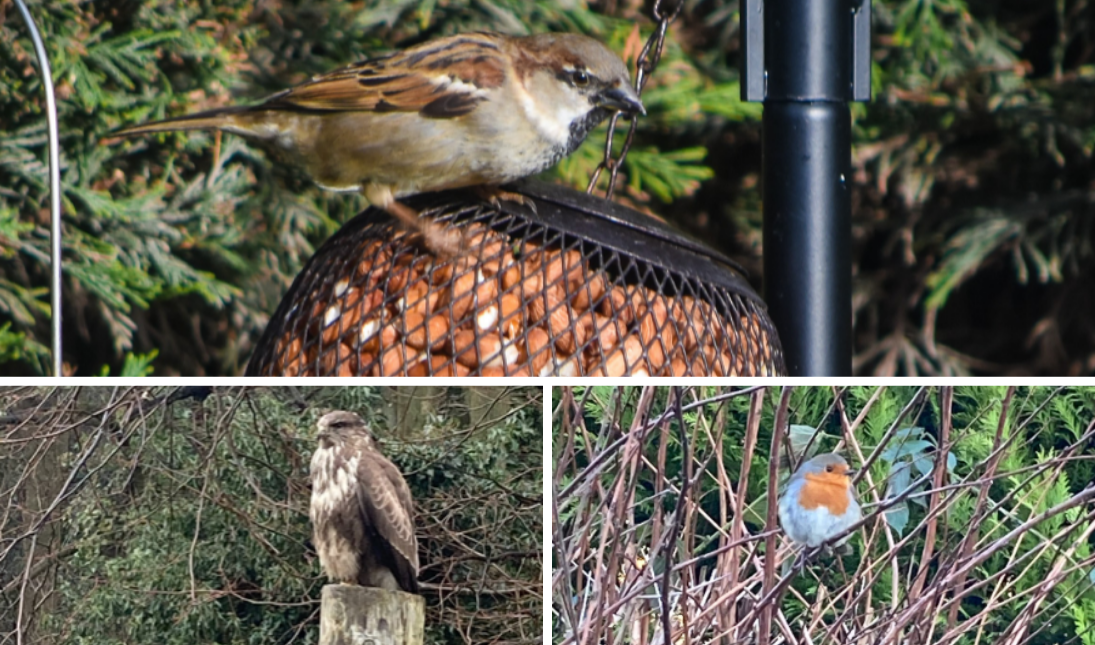 Big Garden Birdwatch Photography Competition thumbnail image